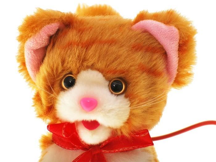 Stiahnite si zdarma túto fotografiu o Katzenbaby Mačka Mladá z Pixabay knižnice public domain obrázkov a videí.