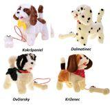 Interaktívny chodiaci pes